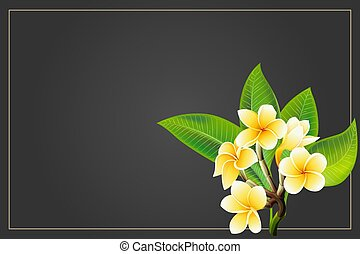 Golden frangipani or plumeria flowers with leaves. Vector...