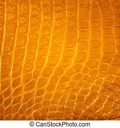 Golden Freshwater crocodile skin texture background