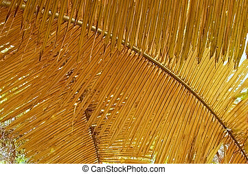 Golden fronds - Golden palm fronds in a Thai forest