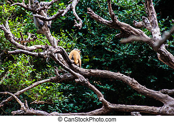 Golden fure baby dusky leaf monkey - Golden fure baby and ...