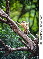 Golden fure baby dusky leaf monkey, Spectacled Langur in ...