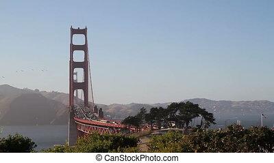 Golden Gate Bridge Birds wide angle shot