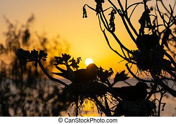 Golden glow of sunset behind silhouette bird - Golden glow ...