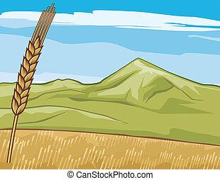 golden grain-field (wheat)