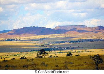 golden grass savana