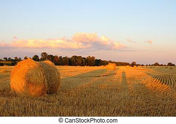 golden harvest afternoon