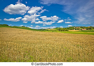 Golden hay field in green agricultural landscape of Prigorje...