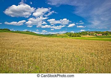 Golden hay field in green agricultural landscape of Prigorje...