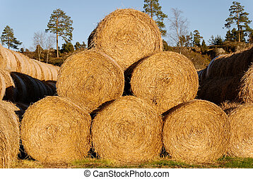 A pyramid of 6 hay bails, lit by low autumn sun.