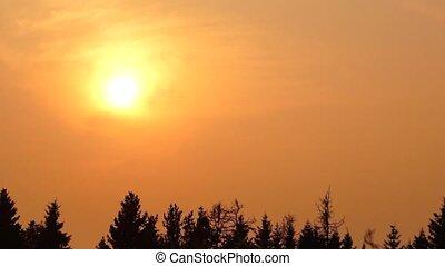 Golden hot sunset pan - Golden sunset over spruce forest in...