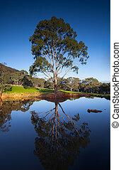 Rural landscape in South Australia