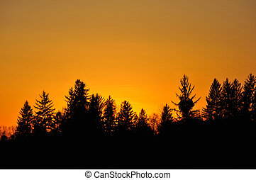 sun setting behind forrest