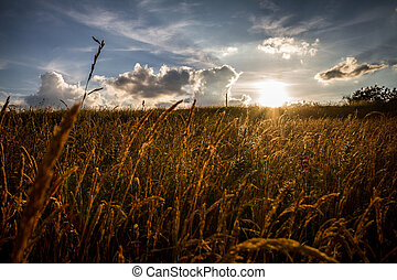 Sunset on a summer meadow with a slightly dramatic sky.