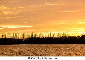 Silhouette of trees and yachts in marina against yellow sky during golden hour over Haringvliet in South Holland, Netherlands