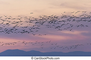 Golden hour with birds flock at Delta BC Canada