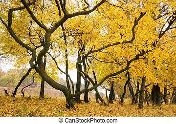 golden hug a tree