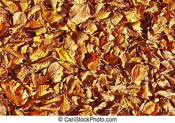 Golden Leaves Background.