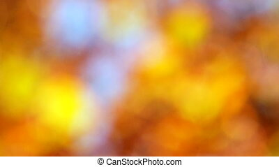 Beautiful autumn leaves in the hot sun. It starts with a strong defocusing the camera.