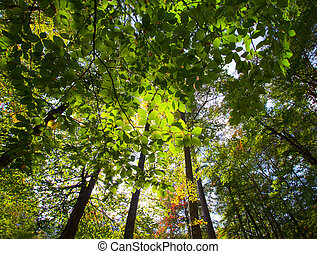 Golden leaves on forest