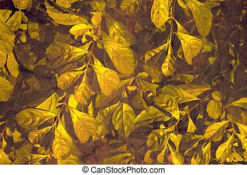 Golden leaves on rich grunge wall background - Golden leaves...