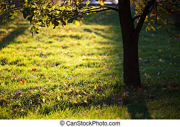 Golden light shining to grass and tree silhouette