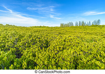 Golden Mangrove Forest (Thung Prong Thong) in Rayong,...