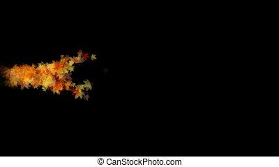 golden maple leafs splash