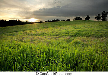 Golden Meadow at Sunset - Lush green pasture at sunset in...
