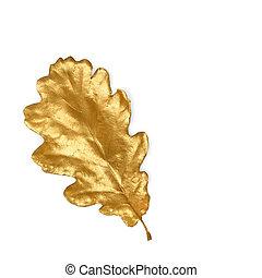 Golden Oak Leaf - Golden oak leaf isolated over white...