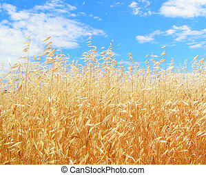 Golden Oats - Gold of ripe oats is in harmony with heavenly...