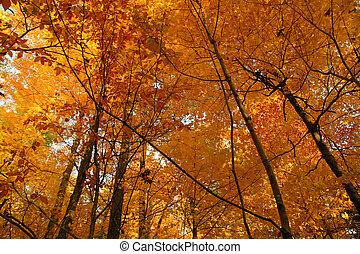 Golden October forest
