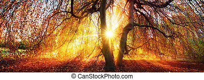 Golden rays of the autumn sun