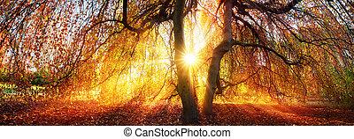 Golden rays of the autumn sun
