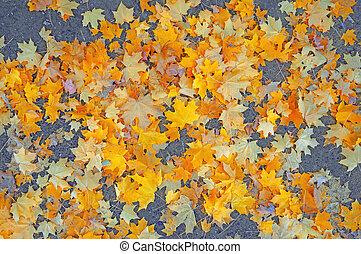 Golden-red maple leaves on gray asphalt as background