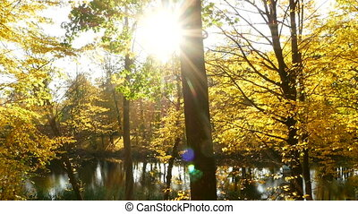 Golden leaves in the wind forest lake
