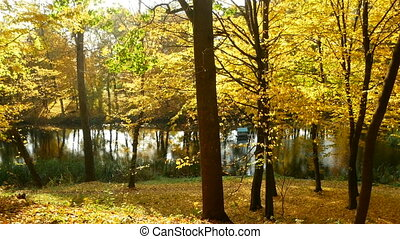 Golden red-tipped leaves flutter in the wind in an autumnal...
