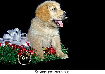 golden retriever-Christmas