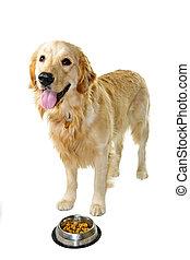 Golden retriever dog with food dish - Golden retriever pet...