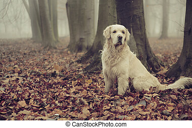 Golden retriever in colorful forest