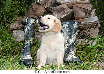 golden retriever pup with boots