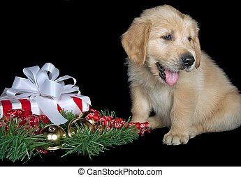 golden retriever pup with gift