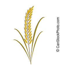 Golden Rice or Jasmine Rice on White Background - ...