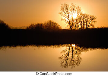 Reflected Riparian Tree in Golden Setting Sunlight