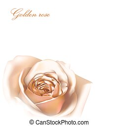 Golden rose greeting card, vector