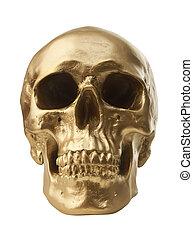 Golden skull on white background - Golden human skull...