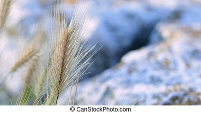Golden small plant blown by the wind closeup footage