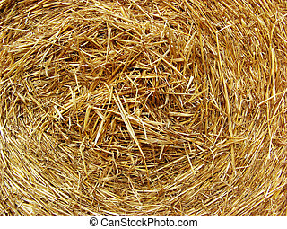 Golden straw texture background, close up