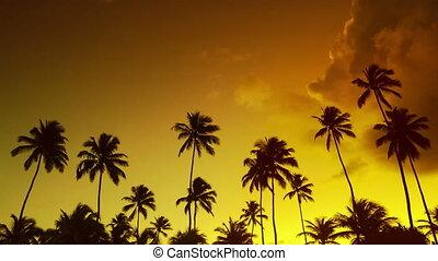 Golden summer palm tree sunset timelapse