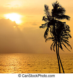 Golden sun set over the ocean. Against the sky the dark silhouette of a coconut tree.
