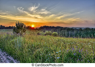 Golden sunbeams of summer sunset over flowering meadow and hills